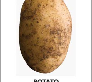 Potato by John Reader