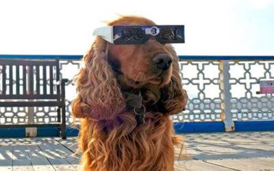 Prepare for the Apoc-Eclipse!