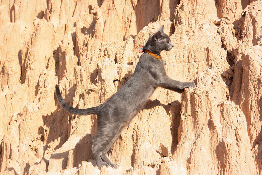 Adventure cat rock climbing