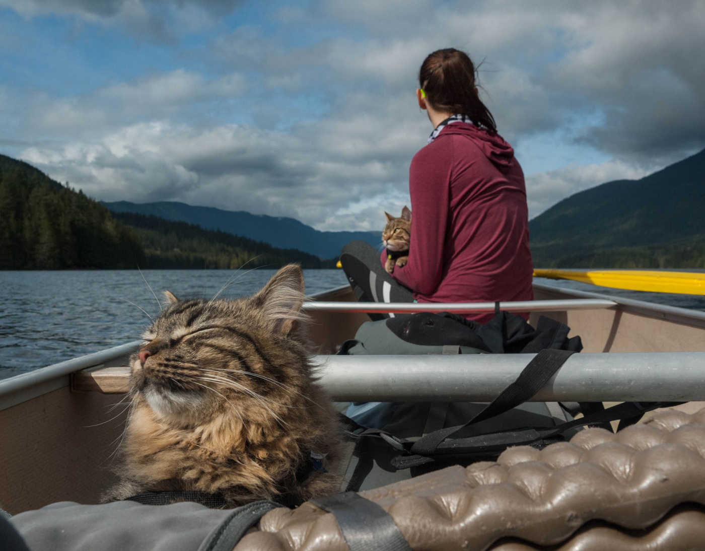 Adventure cats enjoying a boat ride