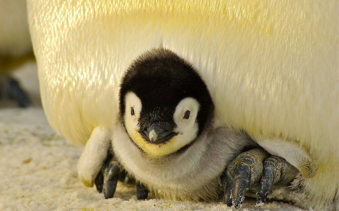 Book Babies: Penguin Fun!