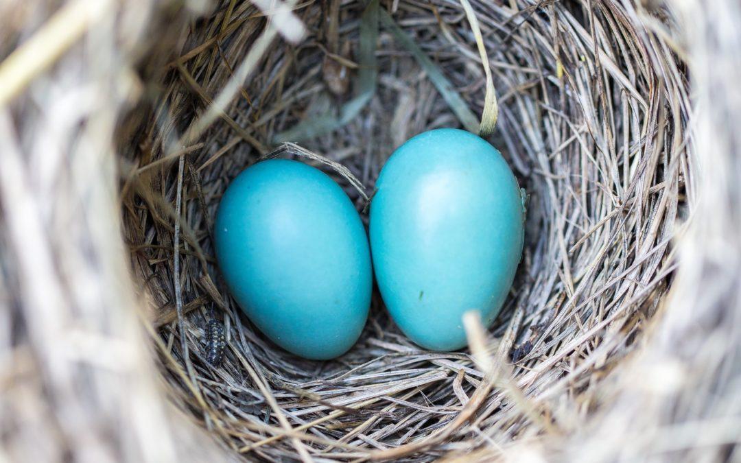 Story Time: Eggceptional Eggs