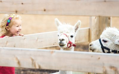 Story Time: Llamas and Alpacas!