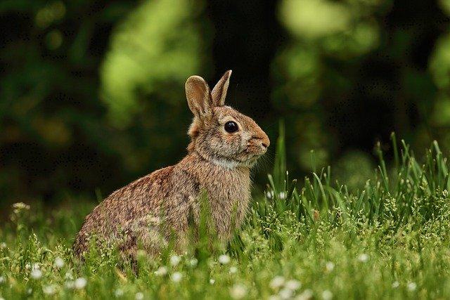 Book Babies + Toddler Time: Rabbits & Bunnies