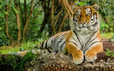 Storytime: Tiger Tales