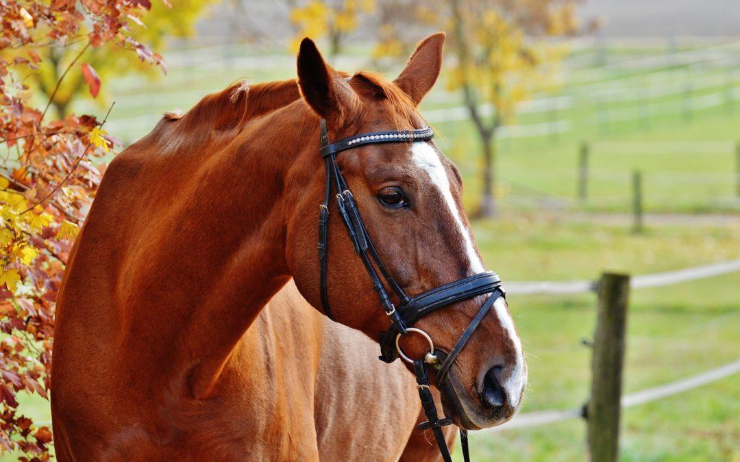 Storytime: Horses